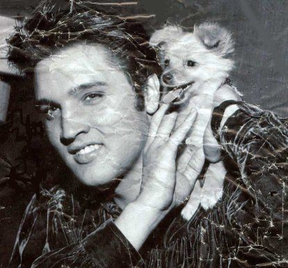 'Elvis Presley' from the web at 'http://www.difossombrone.it/curiosita/../images/personaggi/Elvis_Presley_02.jpg'