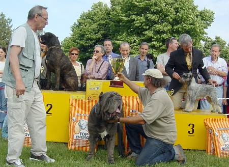 best in show prato