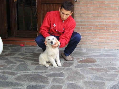 L 39 educazione del nostro cane for Educazione cane