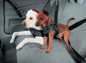 bene migliore online vendita calda Cinture di sicurezza per cani
