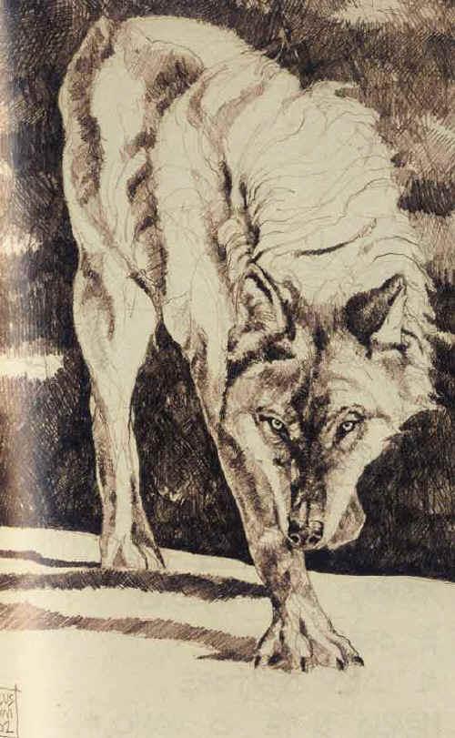 Disegni sui lupi for Disegni di lupi facili