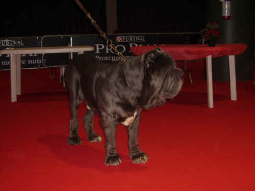 proplan cup 2006