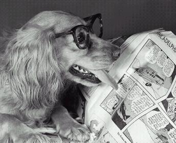 Questo lettore è un cane